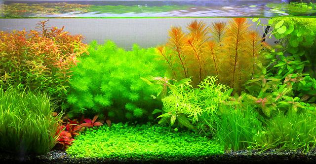 Co2 なし 水草 CO2添加無しで育つ水草8種。初心者が育てやすい水草達