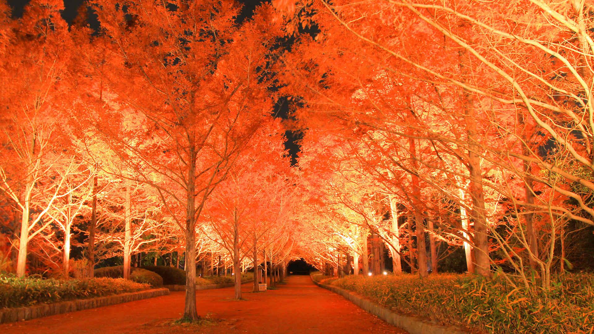 神戸市立森林植物園の紅葉の壁紙